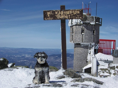 Atticus-at-the-top-of-mount-washington